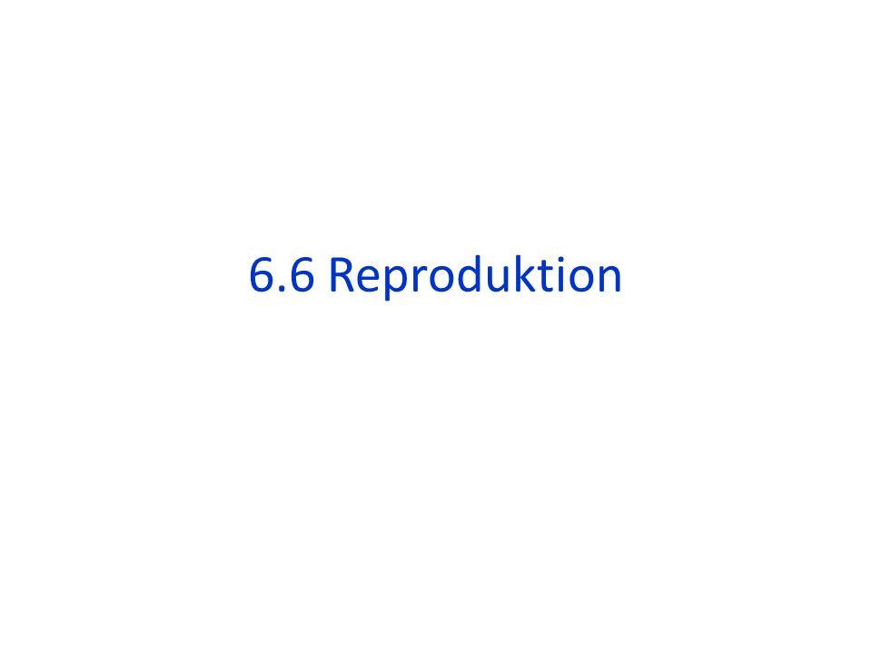 2 Möglichkeiten: 1)Die Eizelle wird nicht befruchtet: der Gelbkörper verkümmert und die Gebärmutterschleimhaut löst sich ab: Menstruation 2) Die Eizelle wird befruchtet: die Gebärmutterschleimhaut schüttet Gonadotropin aus: der Gelbkörper bleibt erhalten und produziert weiterhin Progesteron das Gonadotropin kann mit Schwangerschafts- Teststreifen im Urin nachgewiesen werden