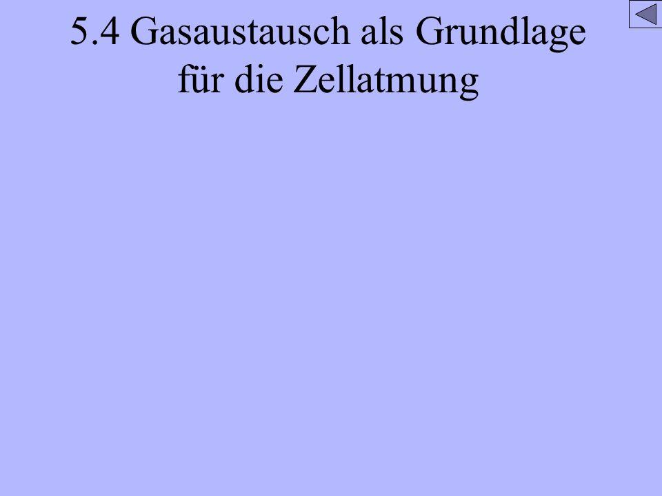 5.4 Gasaustausch als Grundlage für die Zellatmung