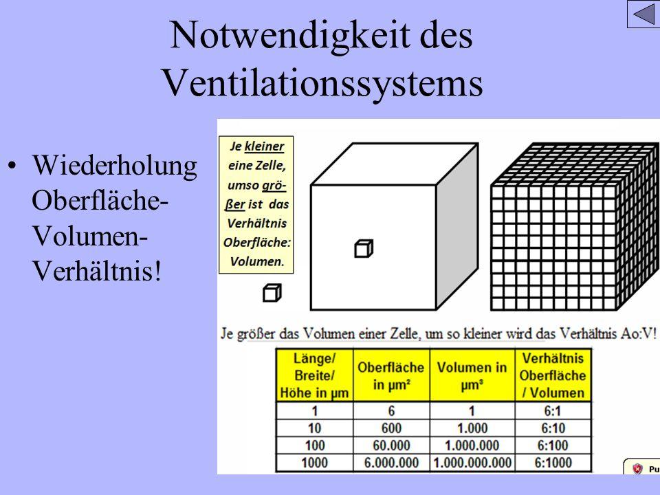 Notwendigkeit des Ventilationssystems Wiederholung Oberfläche- Volumen- Verhältnis!