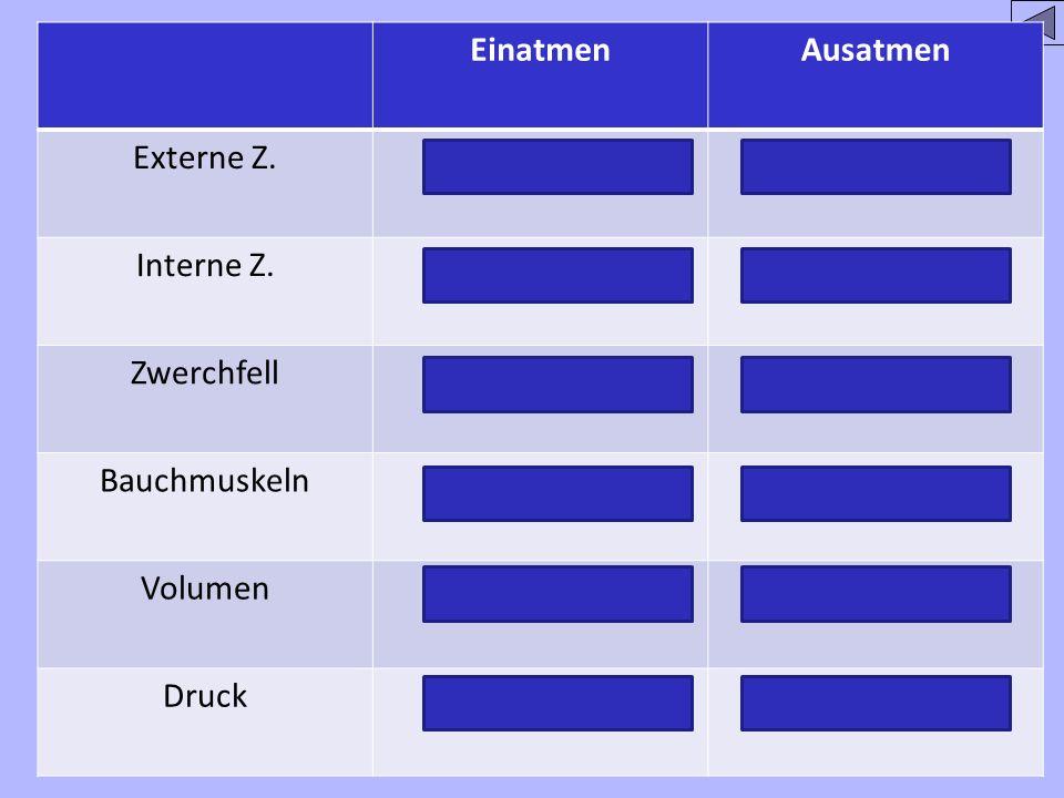 EinatmenAusatmen Externe Z.kontrahiert/entspannt Interne Z.Entspanntkontrahiert ZwerchfellKontrahiertentspannt BauchmuskelnEntspanntkontrahiert Volume