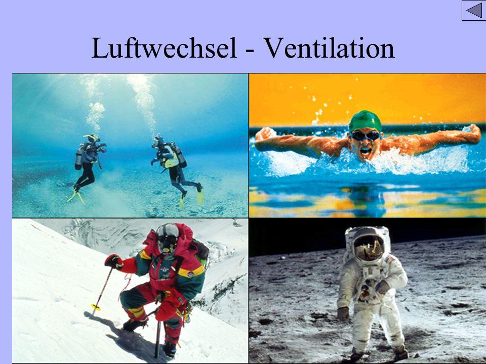 Luftwechsel/ Ventilation sauerstoffreicher sauerstoffarmerEin- und Ausatmen, also die Aufnahme sauerstoffreicher Luft und die Abgabe sauerstoffarmer Luft.