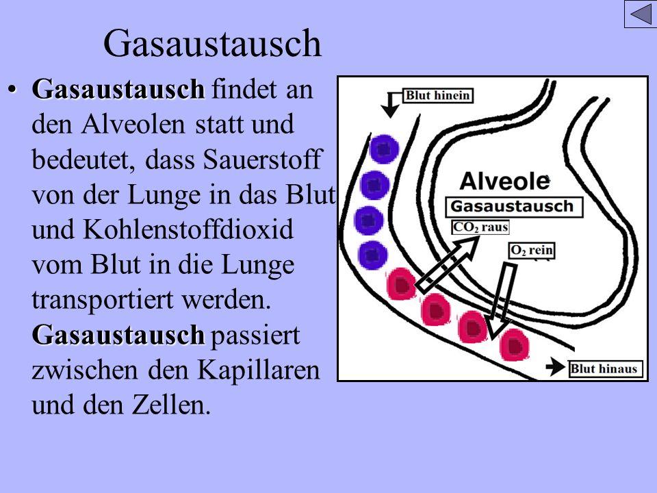 Gasaustausch Gasaustausch GasaustauschGasaustausch findet an den Alveolen statt und bedeutet, dass Sauerstoff von der Lunge in das Blut und Kohlenstof