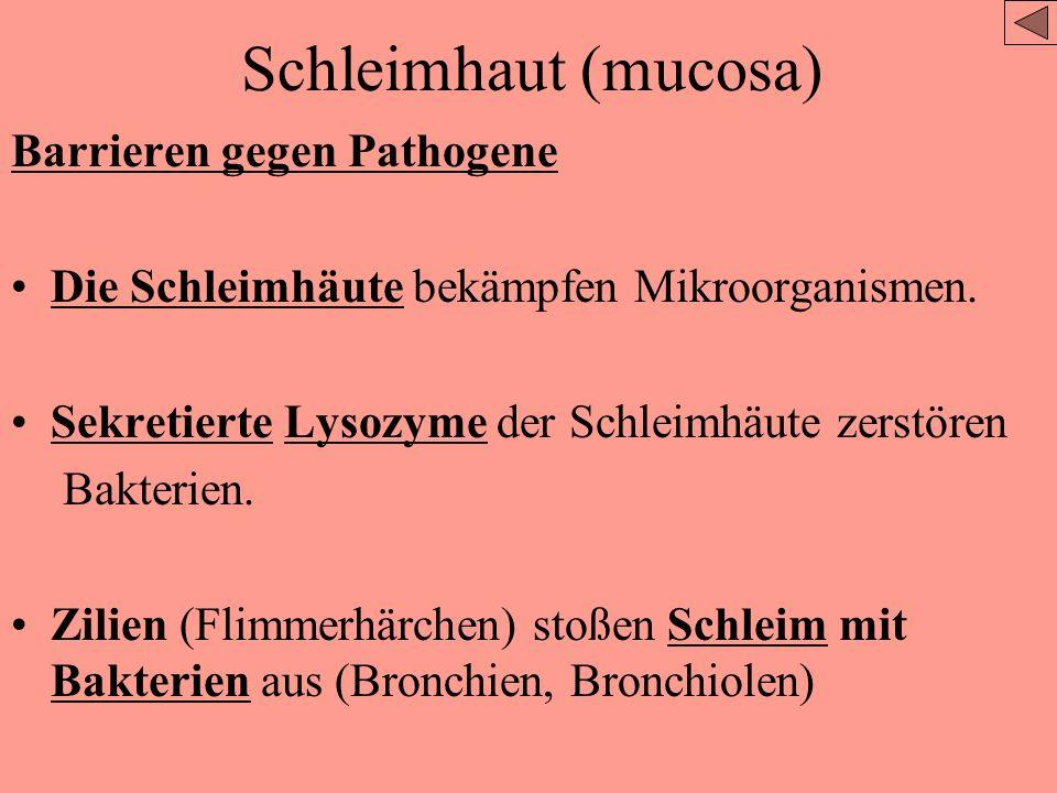 Haut – als Barriere Lysozyme (Enzyme) auf der Haut, sie bekämpfen Pathogene Die Haut hat sauren pH-Wert, Wachstum von (pathogenen) Bakterien wird verh