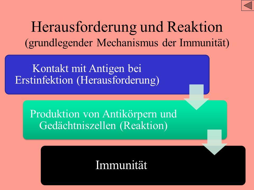 Herausforderung und Reaktion Klonselektion und Gedächtniszellen Film Immunreaktion Zeichne ein Schaubild mit den Begriffen –Makrophage –Antigen –Antik