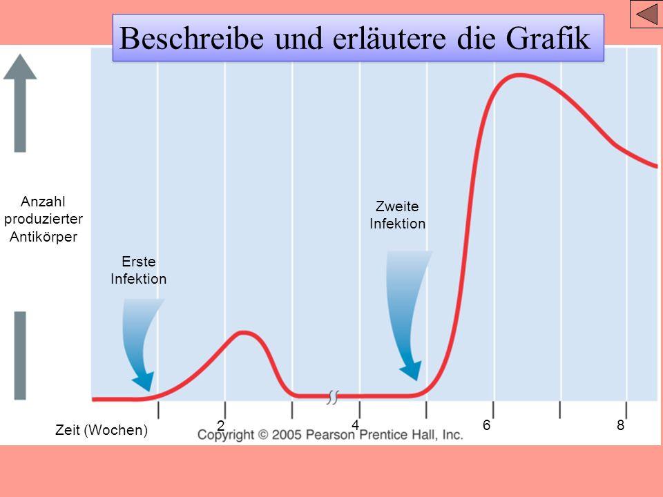 (a) B-Zelle 4 Micrometer (b) Plasmazelle 4 Micrometer Endoplasmatisches Reticulum
