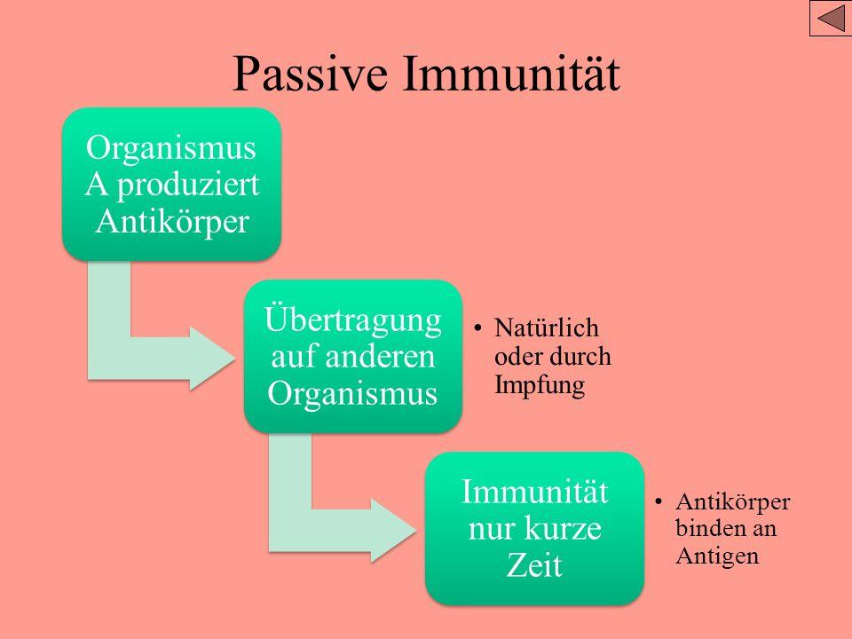 Aktive Immunität Infektion mit Antigen Krankheit oder Impfung Antikörper und Gedächtniszellen Der Körper produziert sie AKTIV Immunität für lange Zeit