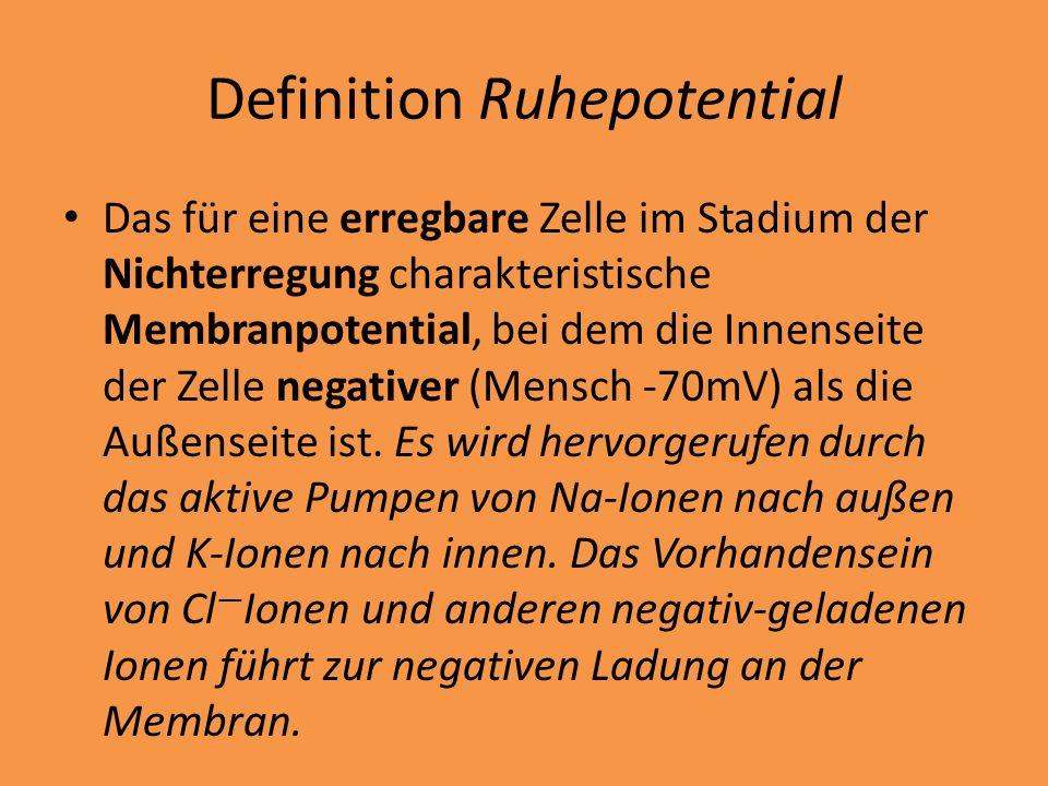 Definition Ruhepotential Das für eine erregbare Zelle im Stadium der Nichterregung charakteristische Membranpotential, bei dem die Innenseite der Zell
