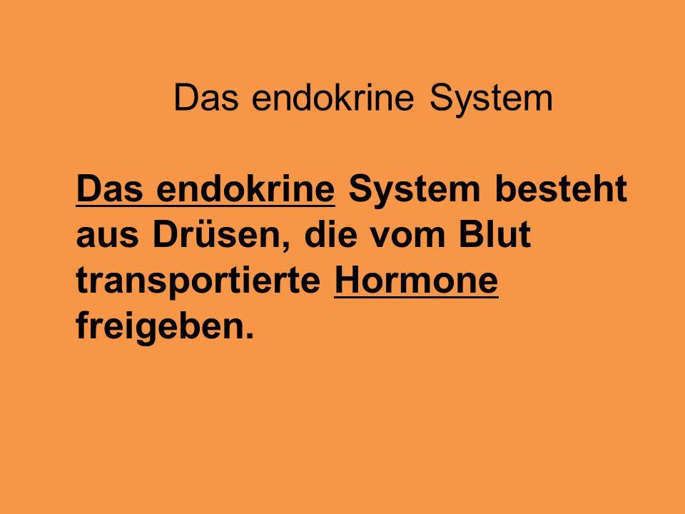 Das endokrine System Das endokrine System besteht aus Drüsen, die vom Blut transportierte Hormone freigeben.