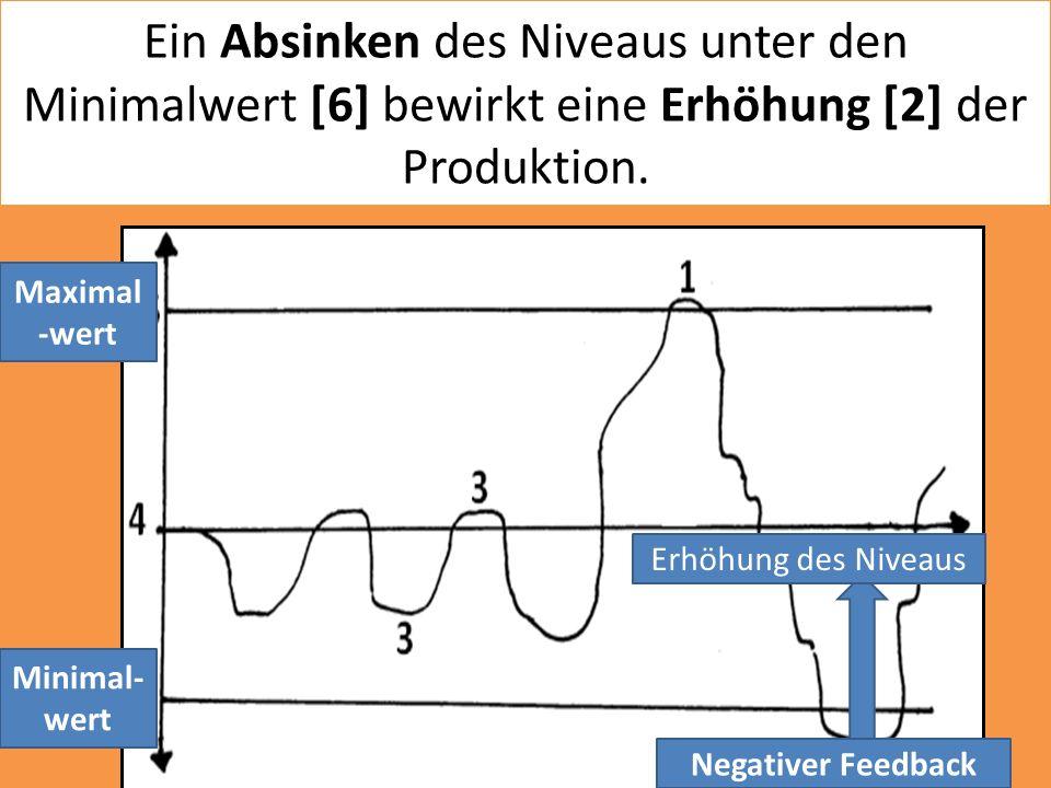 Ein Absinken des Niveaus unter den Minimalwert [6] bewirkt eine Erhöhung [2] der Produktion. Minimal- wert Negativer Feedback Erhöhung des Niveaus Max