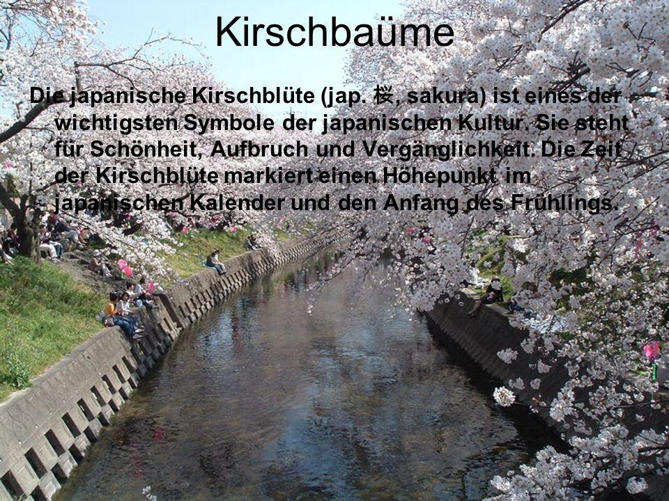 Kirschbaüme Die japanische Kirschblüte (jap., sakura) ist eines der wichtigsten Symbole der japanischen Kultur. Sie steht für Schönheit, Aufbruch und