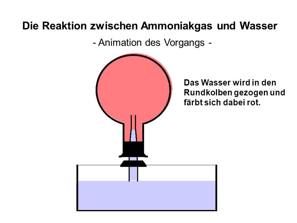 Die Reaktion zwischen Ammoniakgas und Wasser - Animation des Vorgangs - Das Wasser wird in den Rundkolben gezogen und färbt sich dabei rot.