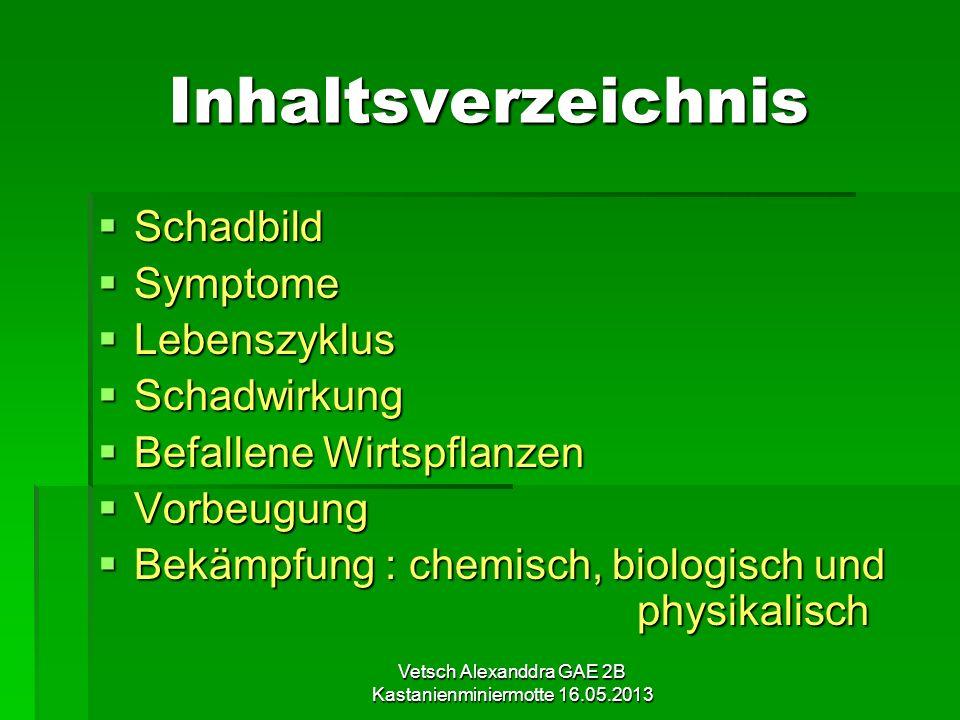 Vetsch Alexanddra GAE 2B Kastanienminiermotte 16.05.2013 Inhaltsverzeichnis Schadbild Schadbild Symptome Symptome Lebenszyklus Lebenszyklus Schadwirku