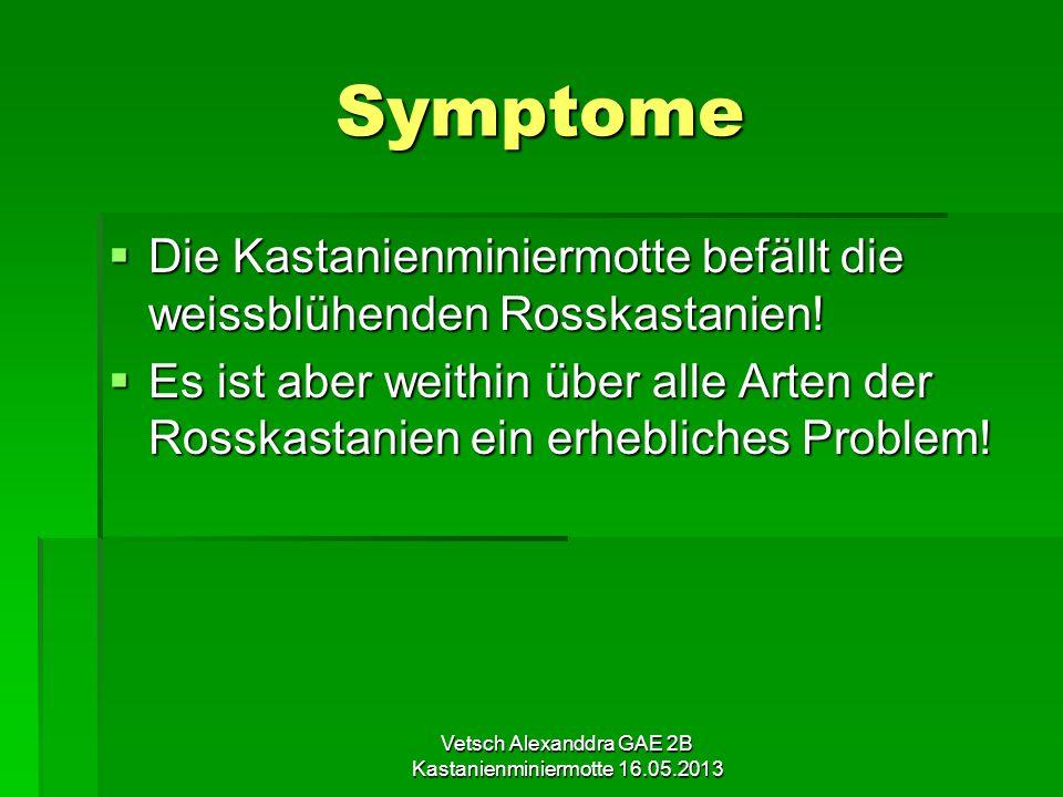Vetsch Alexanddra GAE 2B Kastanienminiermotte 16.05.2013 Lebenszyklus 1.