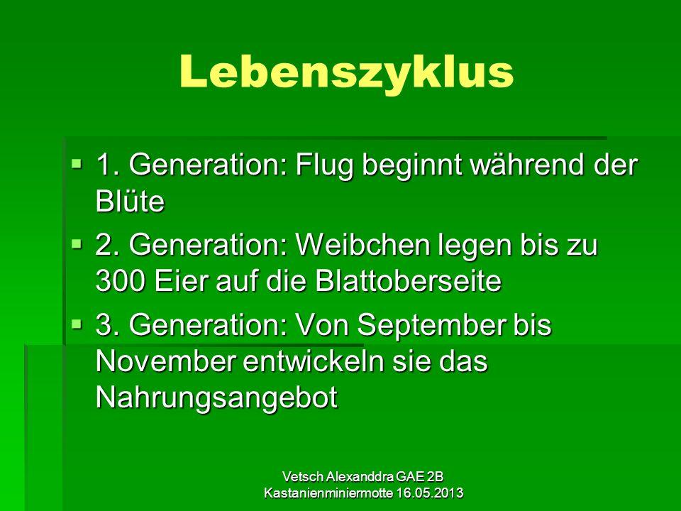 Vetsch Alexanddra GAE 2B Kastanienminiermotte 16.05.2013 Lebenszyklus 1. Generation: Flug beginnt während der Blüte 1. Generation: Flug beginnt währen