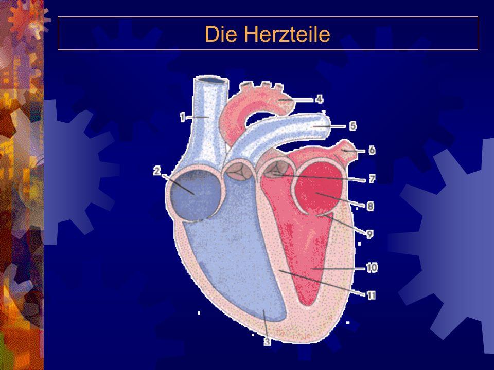 Die Herzteile