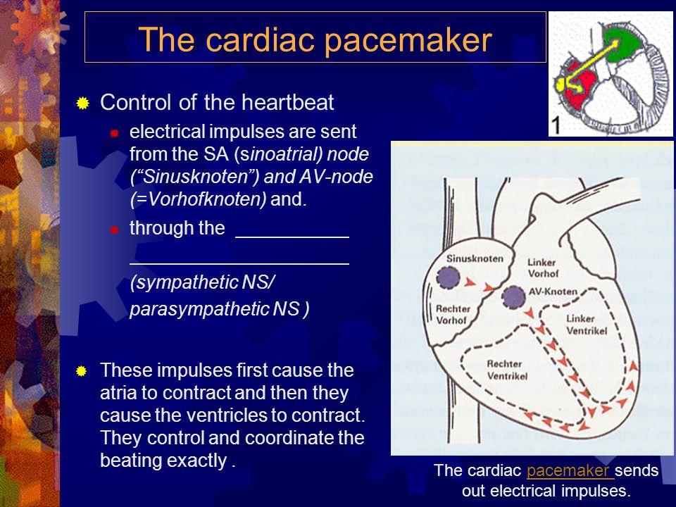 Heart (3): Activity
