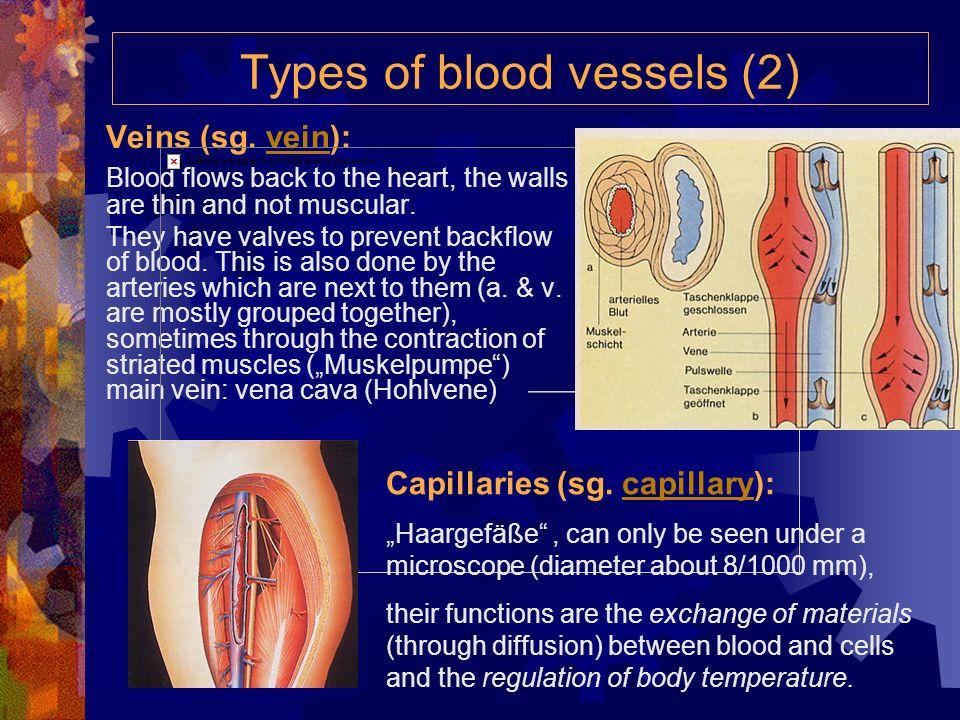 capillaries artery vein arteriole venule tissue fluid tissue cells capillary wall O 2 glucoseCO 2 wastes