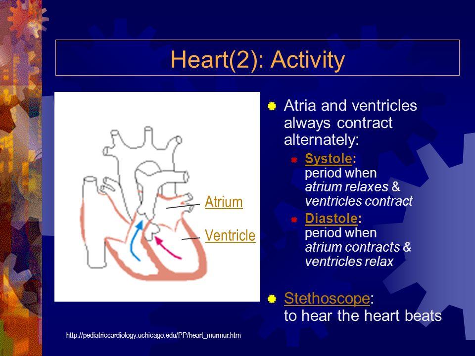 11 Herzscheidewand Die Herzteile 1 Hohlvene (vena cava) 2 rechte Herzvorkammer 3 rechte Herzkammer 4 Aorta 5 Lungenarterie 6 Lungenvene 7 Taschenklapp