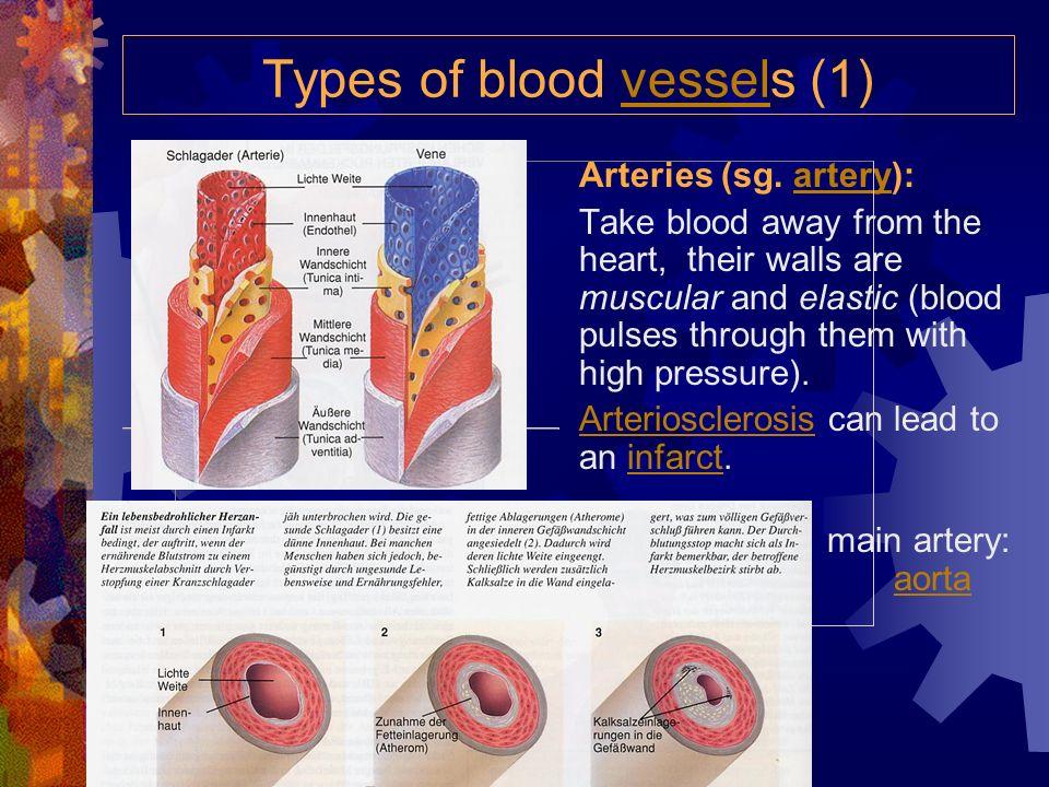 Types of blood vessels (1)vessel Arteries (sg.