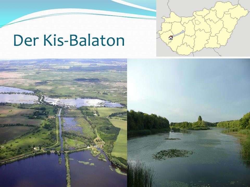 Natürlicher Biologischer Filter des Balatons Länge : 22 km Speicherkapazität : 28 Millionen Kubikmeter Schutzgebiet 14000 Hektar besonders geschützt Blaualgenblüte Reiher