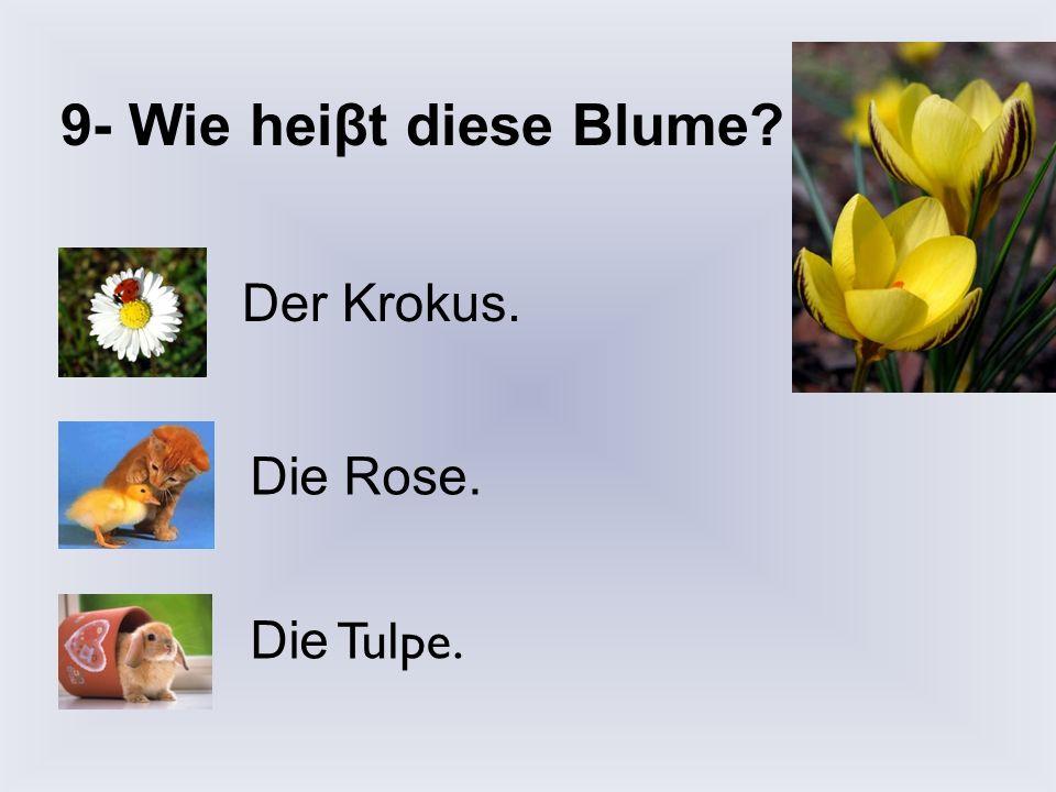 8- Welche Blumen blühen zuerst im Frühling in Deutschland? Schneeglöckchen und Krokusse. Tulpen und Krokusse. Gänseblümchen und Schneeglöckchen.