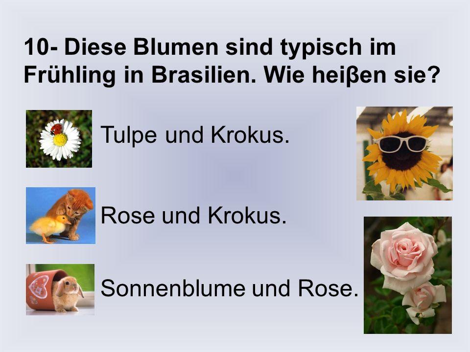 9- Wie heiβt diese Blume? Der Krokus. Die Rose. Die Tulpe.