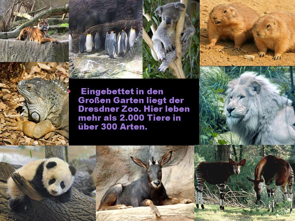 Eingebettet in den Großen Garten liegt der Dresdner Zoo. Hier leben mehr als 2.000 Tiere in über 300 Arten.