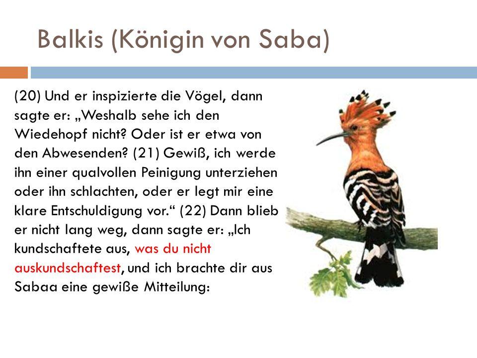 Balkis (Königin von Saba) (20) Und er inspizierte die Vögel, dann sagte er: Weshalb sehe ich den Wiedehopf nicht? Oder ist er etwa von den Abwesenden?