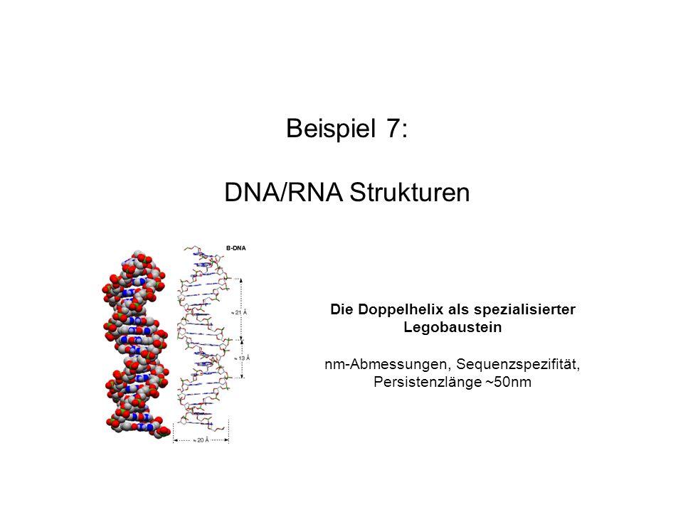 Beispiel 7: DNA/RNA Strukturen Die Doppelhelix als spezialisierter Legobaustein nm-Abmessungen, Sequenzspezifität, Persistenzlänge ~50nm