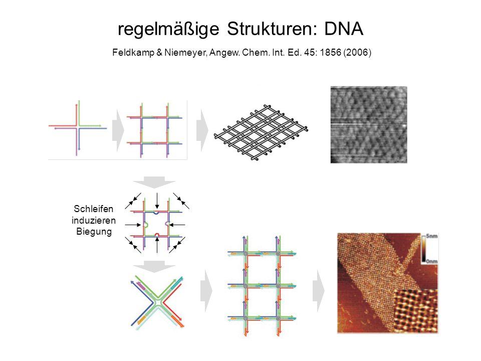 regelmäßige Strukturen: DNA Feldkamp & Niemeyer, Angew. Chem. Int. Ed. 45: 1856 (2006) Schleifen induzieren Biegung