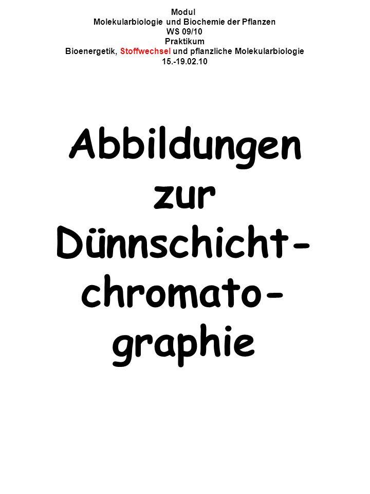 Modul Molekularbiologie und Biochemie der Pflanzen WS 09/10 Praktikum Bioenergetik, Stoffwechsel und pflanzliche Molekularbiologie 15.-19.02.10 Abbildungen zur Dünnschicht- chromato- graphie