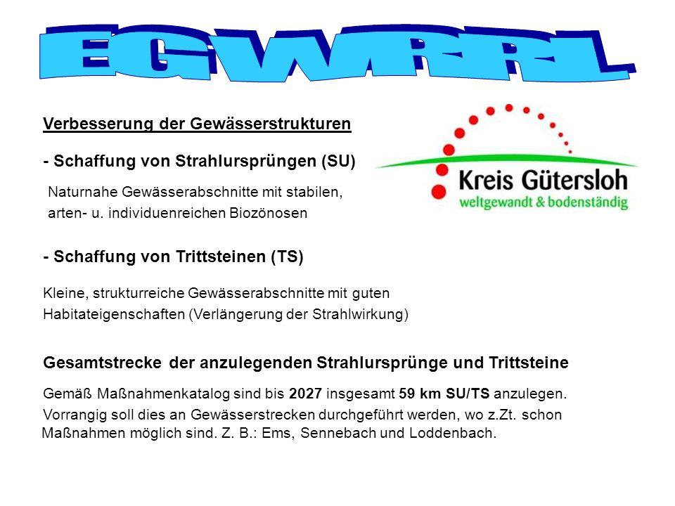 - Schaffung von Strahlursprüngen (SU) - Schaffung von Trittsteinen (TS) Verbesserung der Gewässerstrukturen Naturnahe Gewässerabschnitte mit stabilen,
