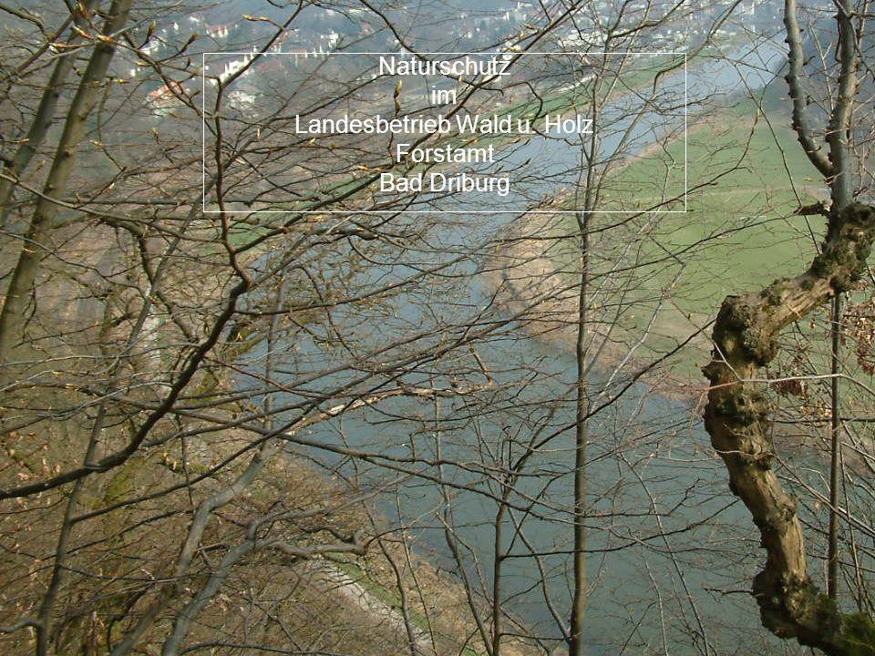 Naturschutzmaßnahmen Naturschutz im Landesbetrieb Wald u. Holz Forstamt Bad Driburg