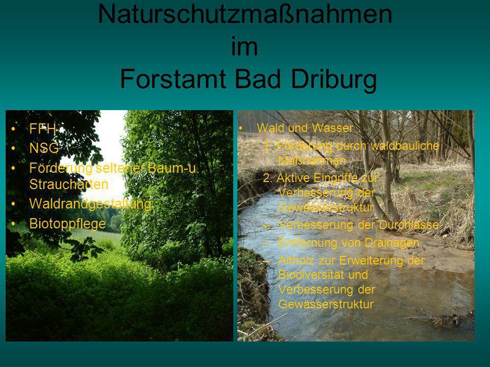Naturschutzmaßnahmen im Forstamt Bad Driburg Wald und Wasser 1.
