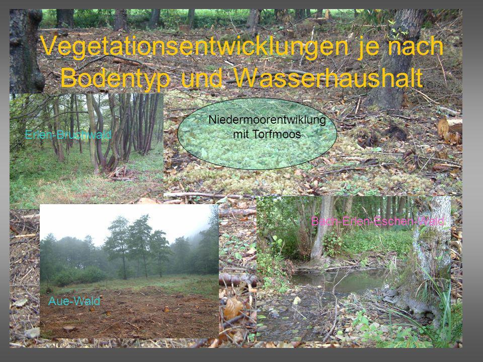 Vegetationsentwicklungen je nach Bodentyp und Wasserhaushalt Niedermoorentwiklung mit Torfmoos Bach-Erlen-Eschen-Wald Erlen-Bruchwald Aue-Wald