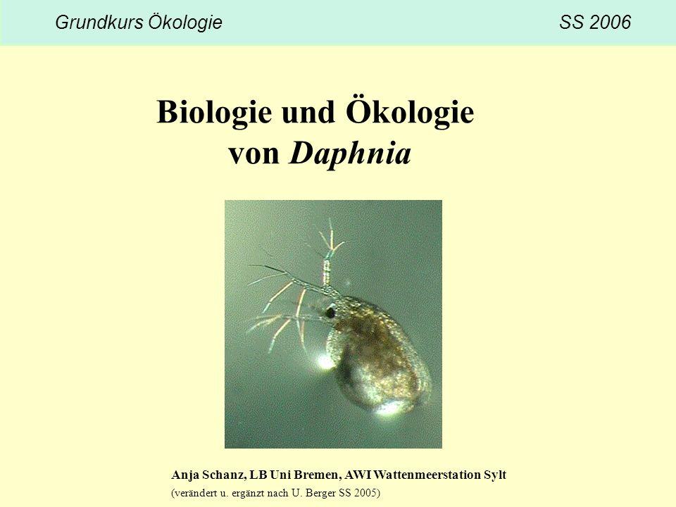 Biologie und Ökologie von Daphnia Grundkurs Ökologie SS 2006 Anja Schanz, LB Uni Bremen, AWI Wattenmeerstation Sylt (verändert u. ergänzt nach U. Berg