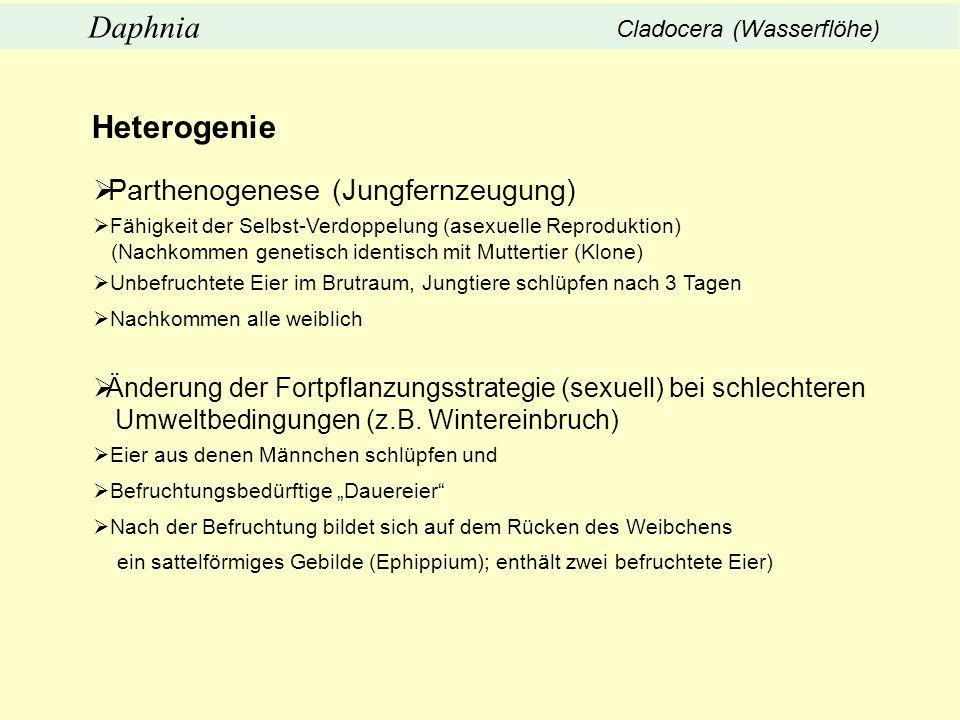 Heterogenie Parthenogenese (Jungfernzeugung) Fähigkeit der Selbst-Verdoppelung (asexuelle Reproduktion) (Nachkommen genetisch identisch mit Muttertier