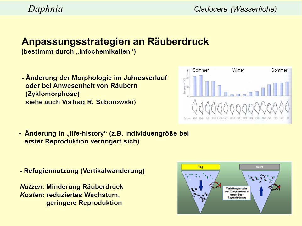 Anpassungsstrategien an Räuberdruck (bestimmt durch Infochemikalien) - Änderung der Morphologie im Jahresverlauf oder bei Anwesenheit von Räubern (Zyk