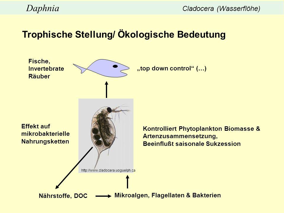top down control (…) Mikroalgen, Flagellaten & Bakterien Kontrolliert Phytoplankton Biomasse & Artenzusammensetzung, Beeinflußt saisonale Sukzession E