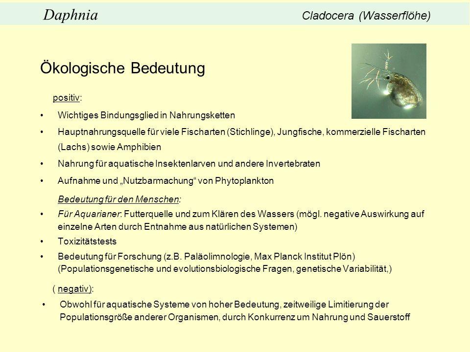 Ökologische Bedeutung positiv: Wichtiges Bindungsglied in Nahrungsketten Hauptnahrungsquelle für viele Fischarten (Stichlinge), Jungfische, kommerziel