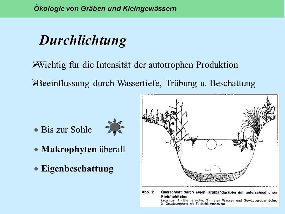 Durchlichtung Durchlichtung Bis zur Sohle Makrophyten überall Eigenbeschattung Ökologie von Gräben und Kleingewässern Wichtig für die Intensität der a