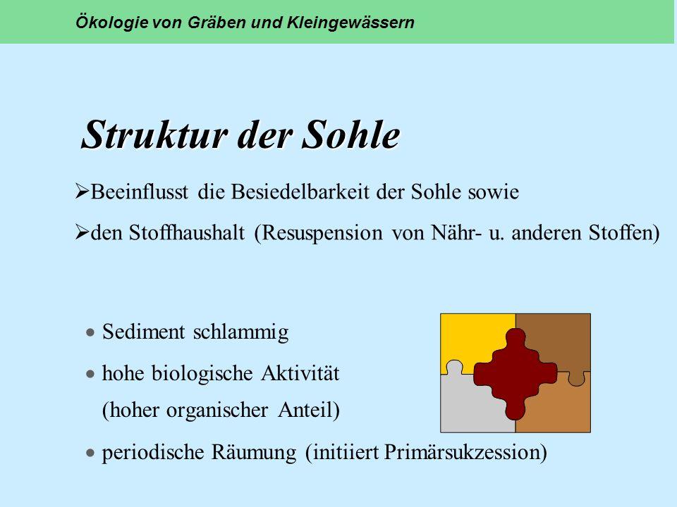Struktur der Sohle Sediment schlammig hohe biologische Aktivität (hoher organischer Anteil) periodische Räumung (initiiert Primärsukzession) Ökologie