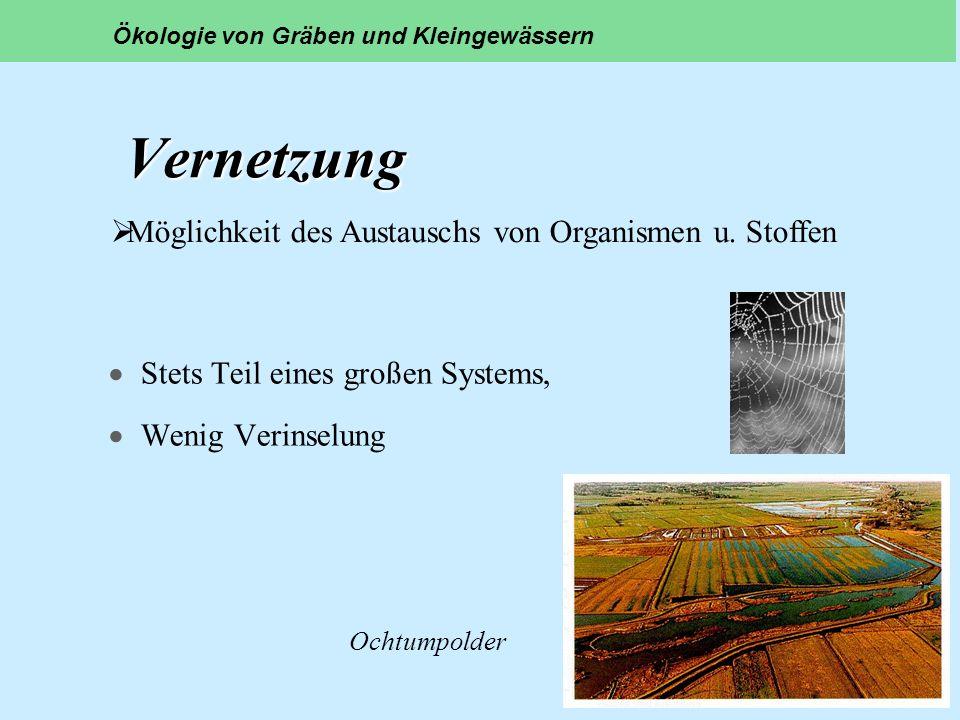 Vernetzung Vernetzung Stets Teil eines großen Systems, Wenig Verinselung Ökologie von Gräben und Kleingewässern Ochtumpolder Möglichkeit des Austausch