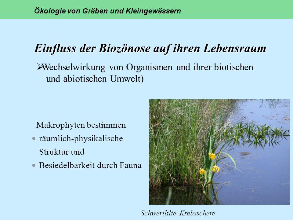 Einfluss der Biozönose auf ihren Lebensraum Makrophyten bestimmen räumlich-physikalische Struktur und Besiedelbarkeit durch Fauna Ökologie von Gräben