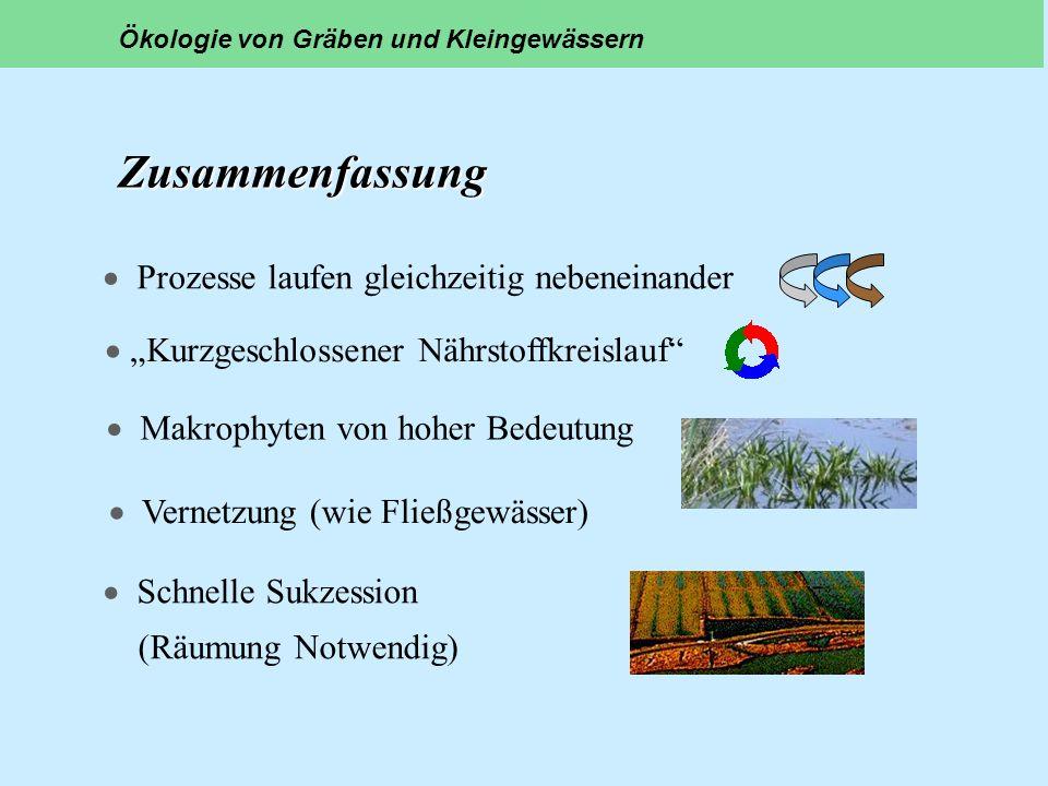 Zusammenfassung Prozesse laufen gleichzeitig nebeneinander Kurzgeschlossener Nährstoffkreislauf Makrophyten von hoher Bedeutung Schnelle Sukzession (R