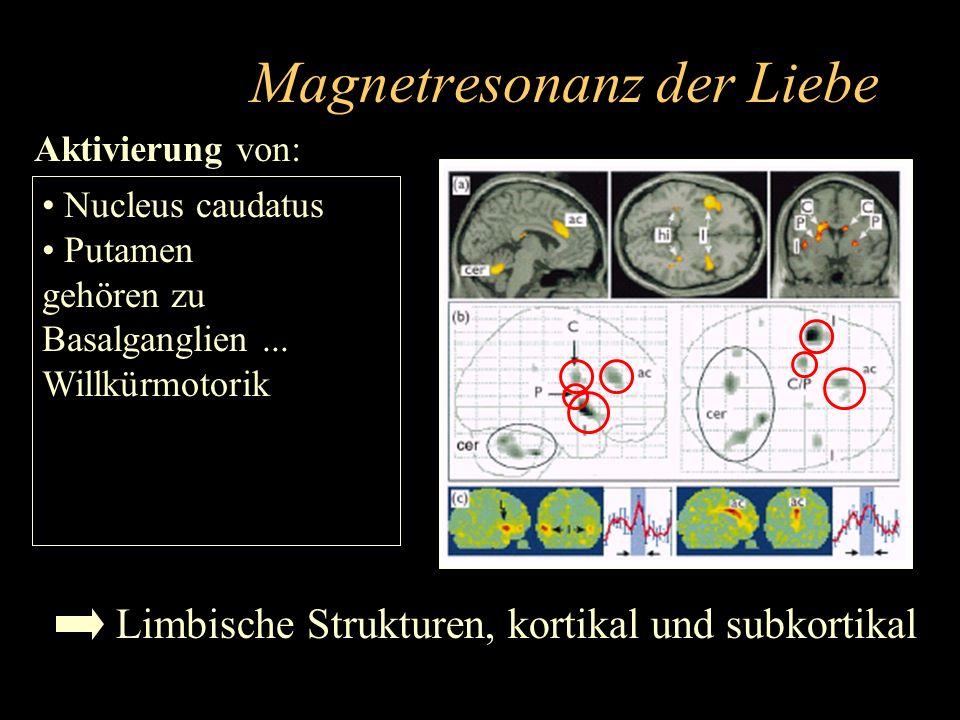 Magnetresonanz der Liebe Aktivierung von: Teilen des insulären Kortex Eingänge z.B. aus Amygdala An Vermittlung von Schmerzempfinden beteiligt. Geschm