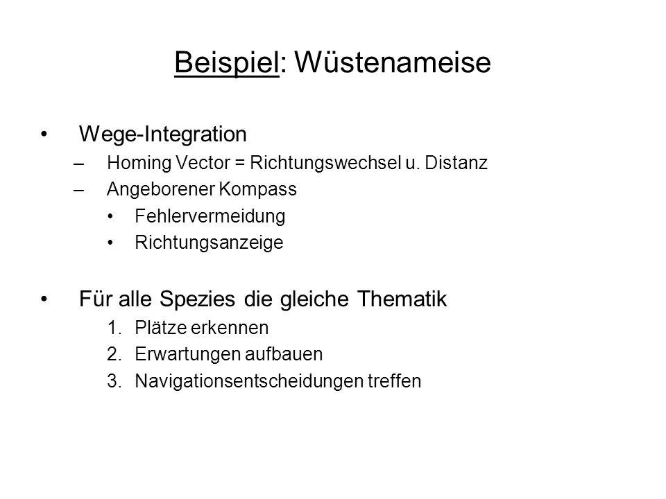Beispiel: Wüstenameise Wege-Integration –Homing Vector = Richtungswechsel u. Distanz –Angeborener Kompass Fehlervermeidung Richtungsanzeige Für alle S