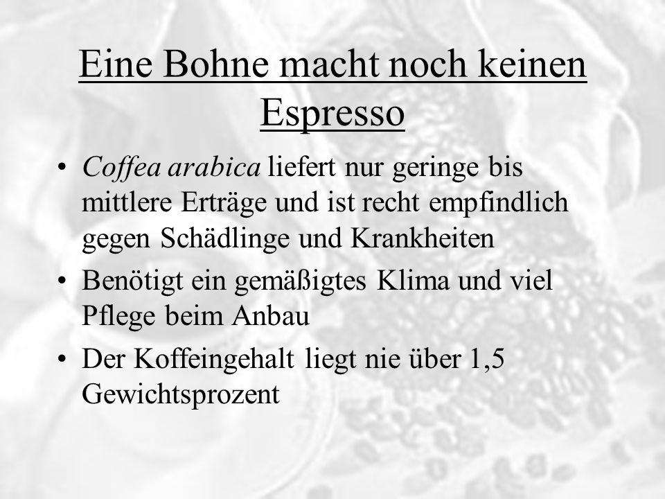 Coffea arabica liefert nur geringe bis mittlere Erträge und ist recht empfindlich gegen Schädlinge und Krankheiten Benötigt ein gemäßigtes Klima und v