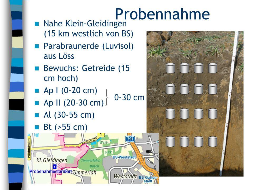 Probenahme Nahe Leiferde (21 km nördlich von BS) Podsol aus Dünensand Kiefernbewuchs (NSG) Ahe (0-20 cm) Ae (20-35 cm) Bh (35-38 cm) Bhs (38-55 cm) C (>55 cm)