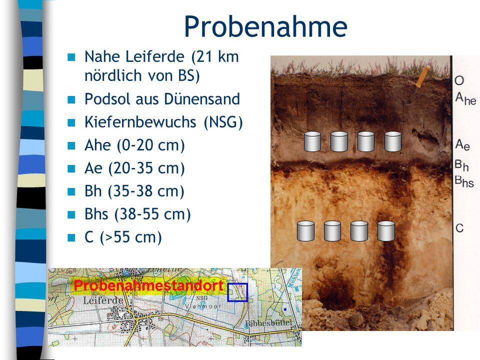 Probenahme Nahe Leiferde (21 km nördlich von BS) Podsol aus Dünensand Kiefernbewuchs (NSG) Ahe (0-20 cm) Ae (20-35 cm) Bh (35-38 cm) Bhs (38-55 cm) C